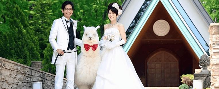 Een Japans stel met een alpaca. Beeld