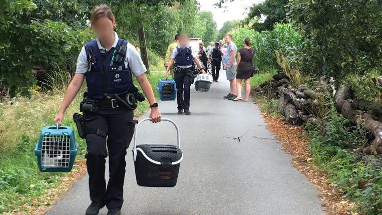 De lokale politiezone van Bodukap kon de huisdieren van de buurtbewoners in veiligheid brengen.