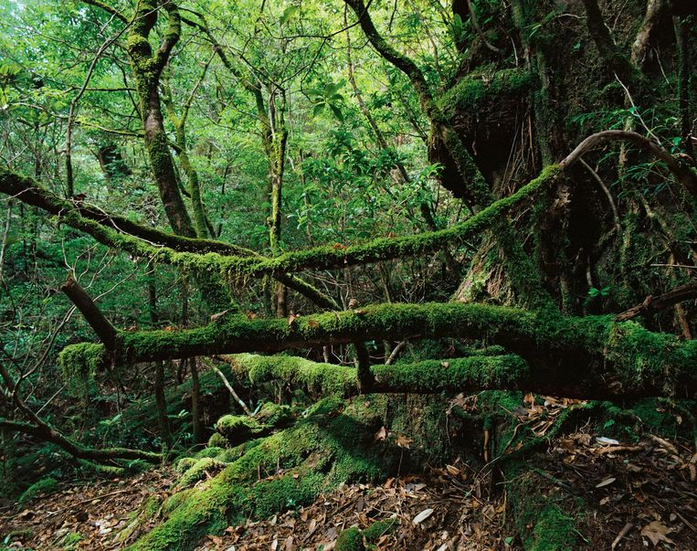 Onoaida Trail, Yakushima, Japan. Beeld Jacqueline Hassink