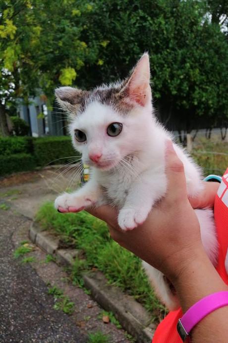 Hardloopster betrapt vrouw bij dumpen van kitten, 'Ik kook van woede'