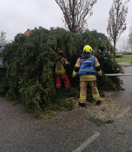 Bomen om in Oosterland en Zierikzee