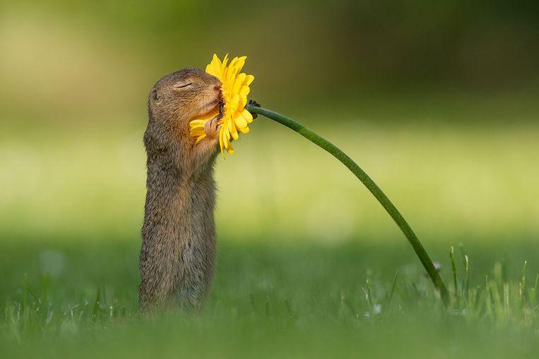 De foto van de eekhoorn die Dick maakte in Oostenrijk gaat de hele wereld rond.
