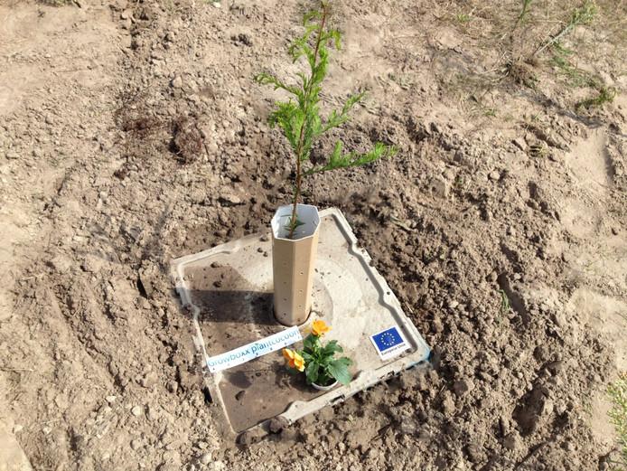 De Growboxx plant cocoon