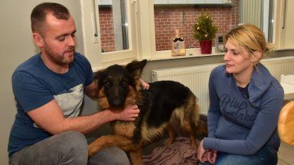 Inbrekers storten zich op moeder van vier, maar dan komt Duitse herdershond Aika tussen