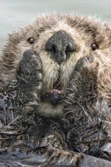 Voici les photos d'animaux les plus drôles de 2019