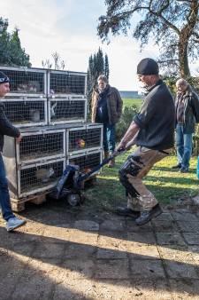 Opnamestop bij Flappus, Zwolse dierenopvang heeft geen geld meer
