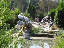 Hovenier in de dierentuin: schoffelen tussen de ringstaartmaki's