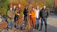 Milieuraad Ternat verdeelt meer dan 3.000 boomplantjes