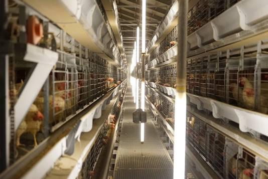 Legbatterijen van een pluimveebedrijf in Overloon.