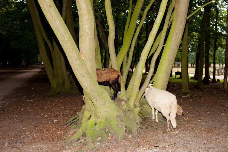 Ook op het Verwildernis-programma: dieren bekijken.    Beeld Renate Beense