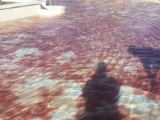 Raadsel: Waalwijkse fontein kleurt langzaam rood