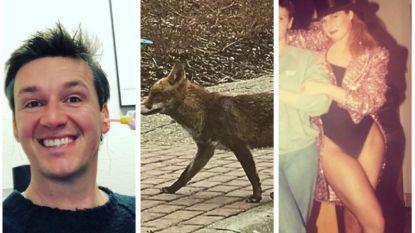 Vandaag op Instagram: een hulpvaardige koe, een gouden bruiloft en een vos met streken