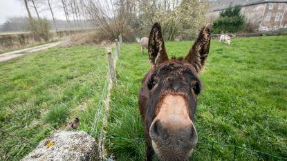 Een frisse neus halen? Op deze mooie wandel- en fietsroutes van Limburg mag het nog