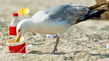 Tientallen dronken meeuwen kateren uit op Britse stranden