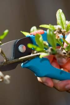 Met deze voorjaarstips krijg je zin om in de tuin te werken
