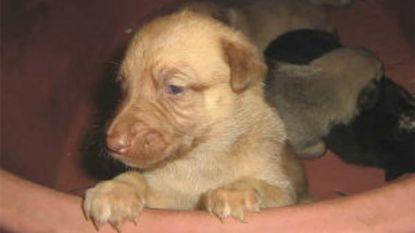 Broodfokker die duizenden honden mishandelde krijgt effectieve celstraf en levenslang verbod op houden van huisdieren
