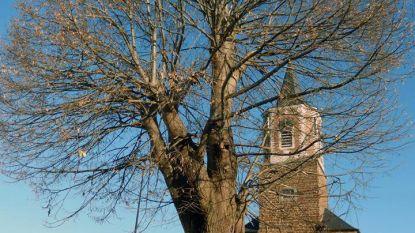 Tonderzwam bedreigt monument van Ottenburg