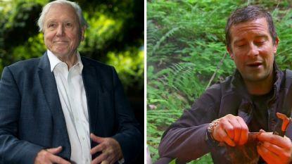 """Sir David Attenborough haalt uit naar Bear Grylls om 'sensationeel slachten' van dieren in survivalprogramma: """"Hij mag het komen uitleggen"""""""