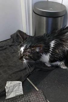 Kattenhaters gieten benzine over poes in Oostvoorne