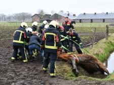Brandweer redt paard uit sloot in Putten