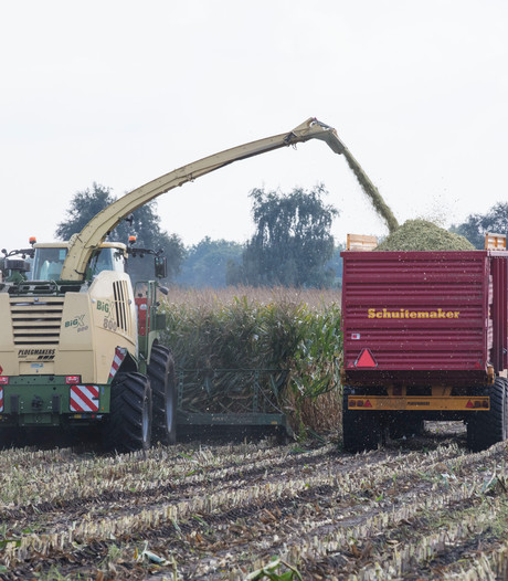 Maisoogst in volle gang in Zuidoost-Brabant