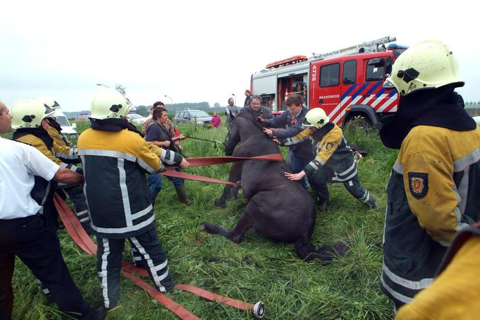 Met man en macht wordt dit paard in Steenbergen weer op zijn hoeven gezet.
