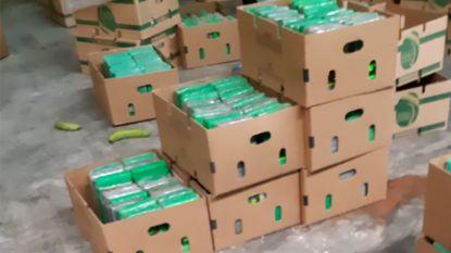 Cocaïnesmokkel via fruitbedrijven: 1.500 kilo coke in Antwerpse haven leidt tot 14 arrestaties in Nederland