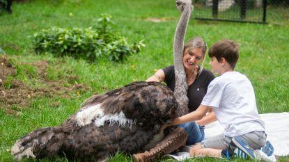 Wendy (38) knuffelt verbazend tamme struisvogels en gaat viraal op TikTok