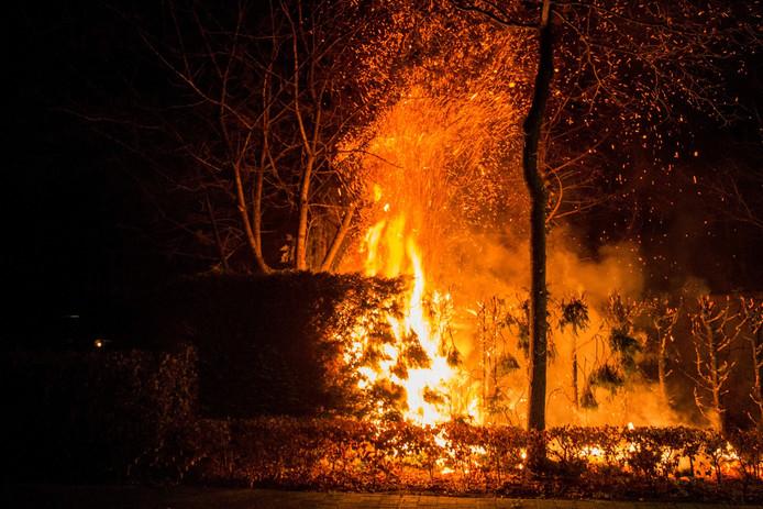 Een coniferen haag bij een woning aan de Molenas in Etten-Leur ging volledig in vlammen op.