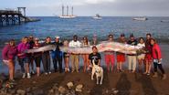 Duikster vindt 'zeemonster' van 5,5 meter lang