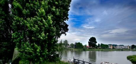 Gemeente en bewoners ruziën: zijn bomen nu ziek of niet?