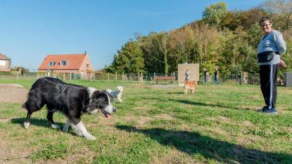 Honden genieten van nieuwe losloopweide