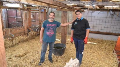Politie neemt 65 verwaarloosde schapen in beslag