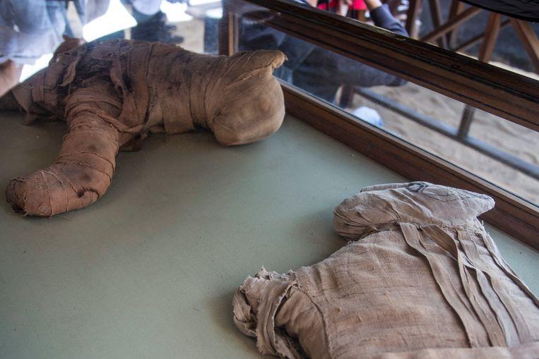 Gemummificerde leeuwenwelpjes worden tentoongesteld in Saqqara.