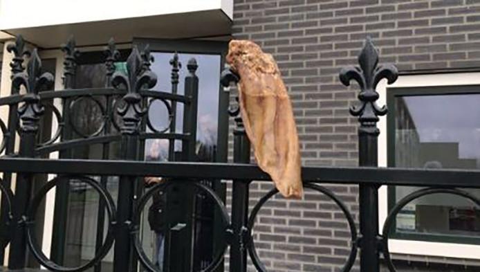 Onbekenden hebben een varkensoor aan het hek vastgemaakt.