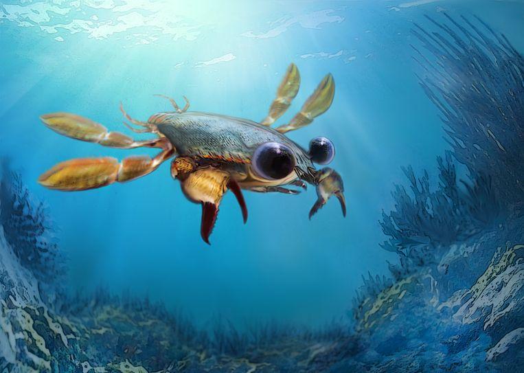 Illustratie van de wonderlijke krab. Beeld Oksana Vernygora, University of Alberta