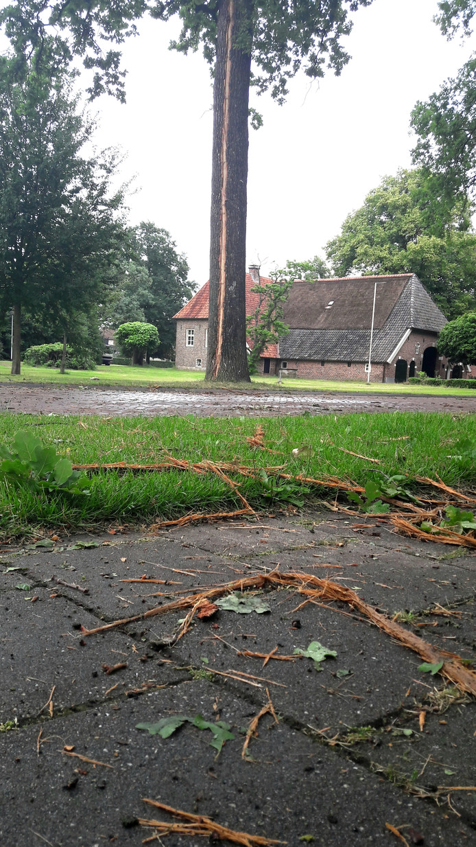 Stukken bast van de boom zijn door de 'explosie'van de blikseminslag in het rond geslingerd tot in tuinen aan de overkant van de Meijersweg.
