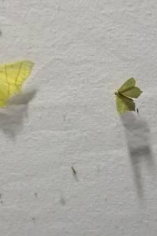 Nachtvlinderpracht in de Vlinderdas