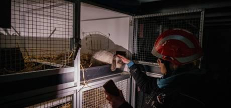 Konijnenparadijs bij Willemsoord stort in door storm: 'Het was janken, janken en nog eens janken'