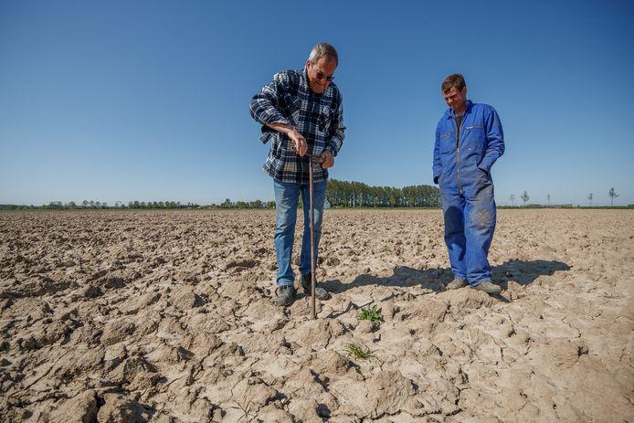 Boeren hebben alweer flink te kampen met de droogte. Zo ook vader en zoon Are en Jorick Maris.