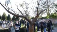 Vlinderboom voor jonge kindjes in de hemel