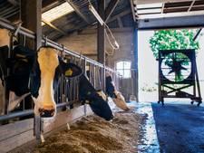 Veertig Brabantse boeren lopen warm voor provinciaal stallenplan