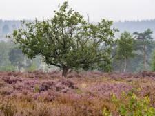 Sallandse Heuvelrug is ondanks de vele regen nog lang niet uit de problemen: 'En dat lossen we niet even op'