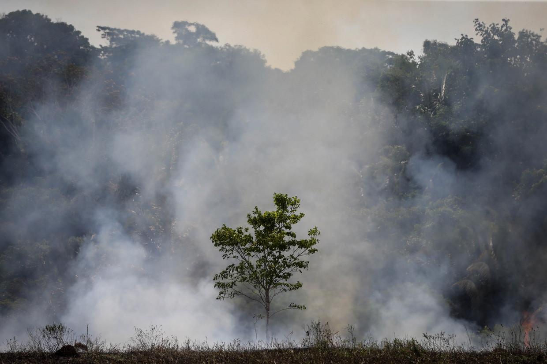Meer dan vier miljoen hectare Amazonegebied is al in vlammen opgegaan.