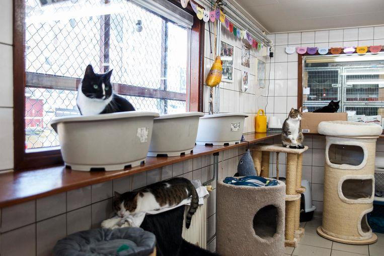 Zo'n 250 katten verblijven jaarlijks op de Poezenboot Beeld Carly Wollaert