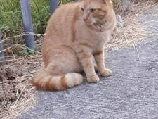 IJselsteinse kat overleden door vuurwerk in achterwerk