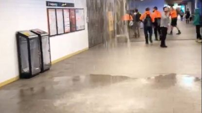 Parapluutje nodig? Hevigste zondvloed in 34 jaar in Sydney