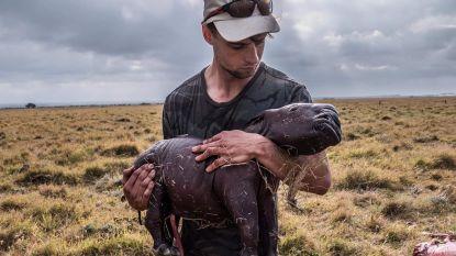 """""""Ze stierf een extreem pijnlijke dood"""": hartverscheurende foto toont ongeboren kalfje van neushoorn die met kogels doorzeefd werd"""