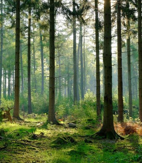 Amersfoort plant komende jaren 4000 nieuwe bomen