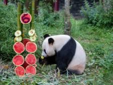 Verjaardagsfeestje voor de Rhenense panda's